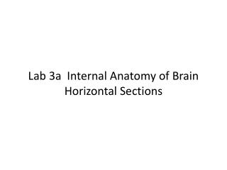 Lab 3a  Internal Anatomy of Brain Horizontal Sections