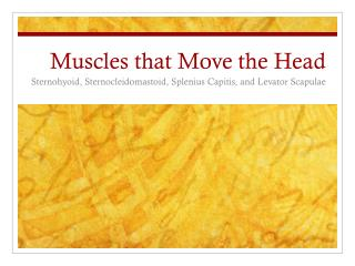 Muscles that Move the Head