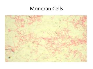 Moneran  Cells