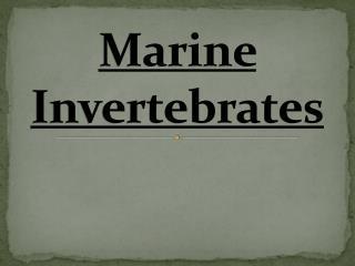 Marine Invertebrates