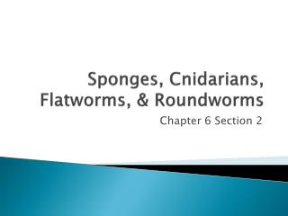 Sponges, Cnidarians, Flatworms, & Roundworms