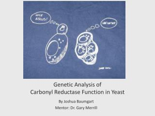 Genetic Analysis of  Carbonyl Reductase Function in Yeast