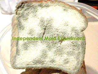 Independent Mold Experiment