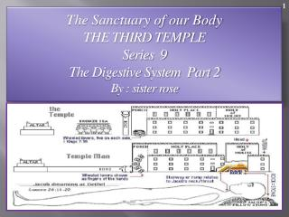 The Sanctuary of our Body THE THIRD TEMPLE Series  9   The Digestive System  Part 2