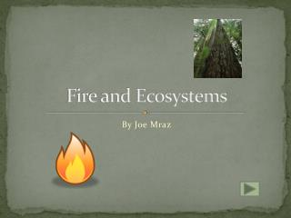 Fire and Ecosystems