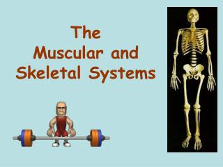 The  Muscular and Skeletal Systems