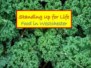 Standing Up for Life   Food in Westchester