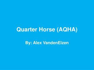 Quarter Horse (AQHA)