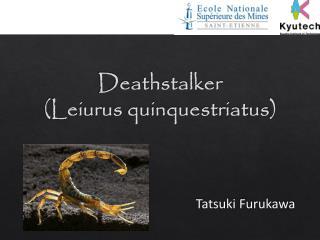 Deathstalker ( Leiurus quinquestriatus )