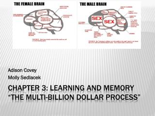 "Chapter 3: Learning and Memory  ""The multi-billion dollar process"""