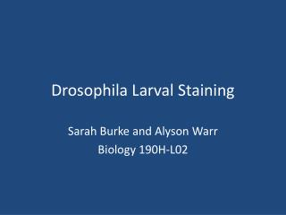 Drosophila Larval Staining