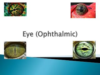 Eye (Ophthalmic)