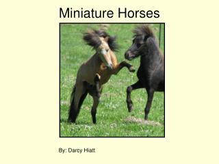 34 - Miniature Horses