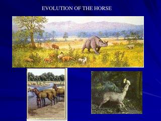 Evolution and Events06
