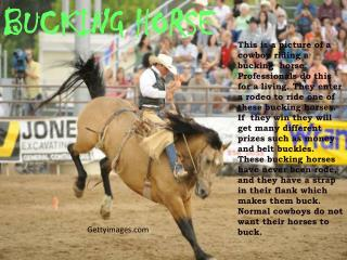 Gettyimages This is a picture of a cowboy riding a ...