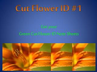 Cut Flower ID #1