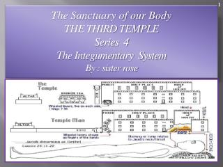 The Sanctuary of our Body THE THIRD TEMPLE Series  4   The Integumentary  System  By : sister rose