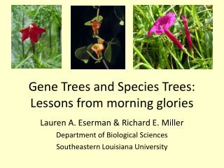 Gene Trees and Species Trees: Lessons from morning glories