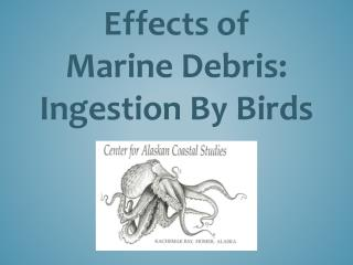 Effects of  Marine Debris: Ingestion By Birds
