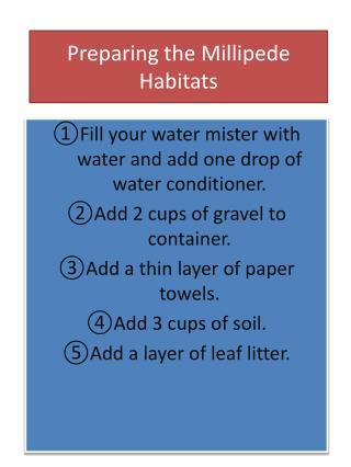 Preparing the Millipede Habitats