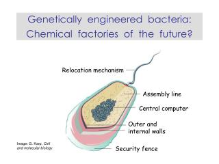 Genetically  engineered  bacteria:  Chemical  factories  of  the  future