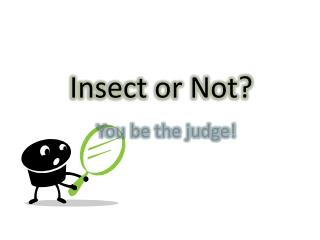 Insect or Not?