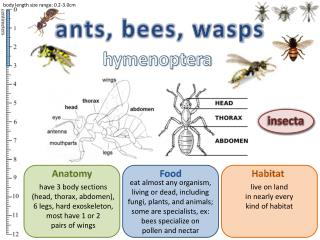 ants, bees, wasps