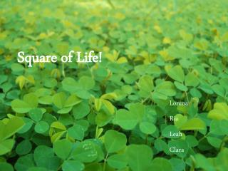 Square of Life!