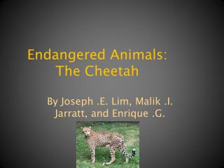 Endangered Animals: The Cheetah