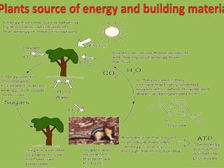 Plants source of energy and building materials