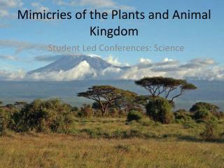 Mimicries of the Plants and Animal Kingdom