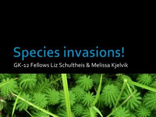 Species invasions!