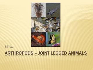 Arthropods – Joint legged animals