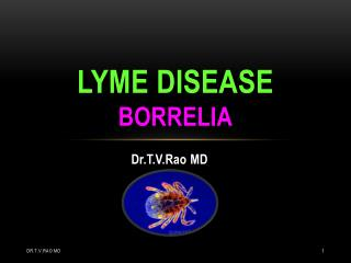 lyme  disease Borrelia