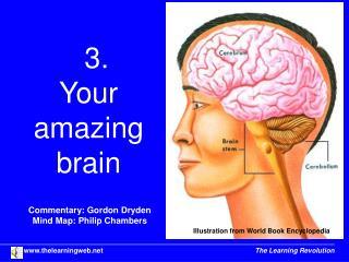 3.  Your  amazing  brain