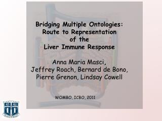 Bridging Multiple Ontologies:  Route  to  Representation  of the  Liver Immune  Response