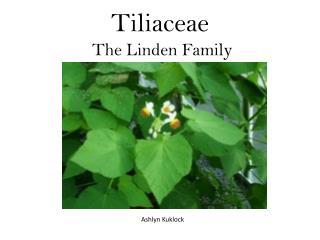 Tiliaceae  The Linden Family