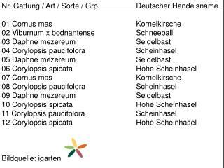 Nr. Gattung / Art / Sorte /  Grp .  Deutscher Handelsname 01  Cornus mas Kornelkirsche