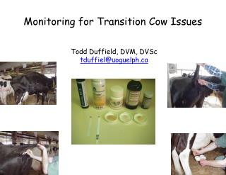 Monitoring for Transition  Cow Issues