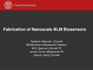 Fabrication of Nanoscale BLM Biosensors