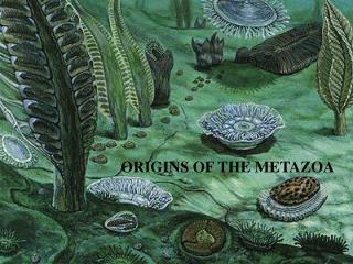ORIGINS OF THE METAZOA