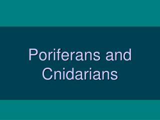 Poriferans and Cnidarians