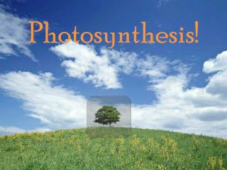 Photosynthesis!