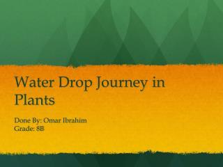 Water Drop Journey in Plants