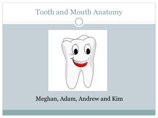 Tooth and Mouth Anatomy