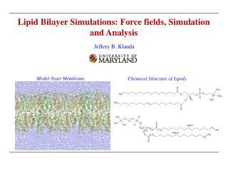 Lipid Bilayer Simulations: Force fields, Simulation and Analysis