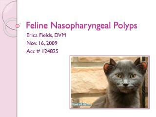 Feline Nasopharyngeal Polyps