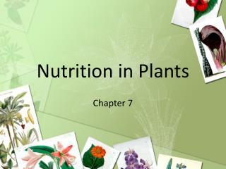 Nutrition in Plants