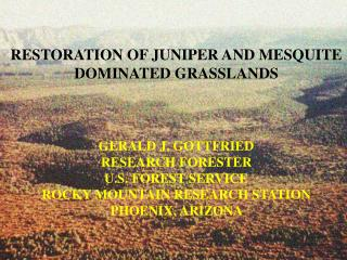 RESTORATION OF JUNIPER AND MESQUITE DOMINATED GRASSLANDS GERALD J. GOTTFRIED RESEARCH FORESTER