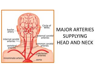 MAJOR ARTERIES SUPPLYING  HEAD AND NECK